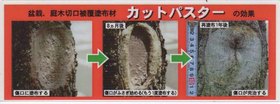 盆栽 癒合剤 カットパスター
