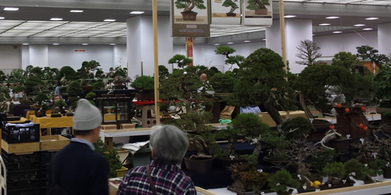 Nippon bonsai taikan-ten Japan