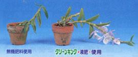 盆栽肥料 トップドレッシング