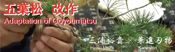 Bonsai goyoumatsu before and after