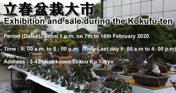 Bonsai kokufuten Tokyo Ueno Japan 2020