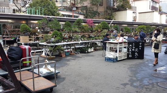 国風盆栽展 立春盆栽大市 上野グリーンクラブ