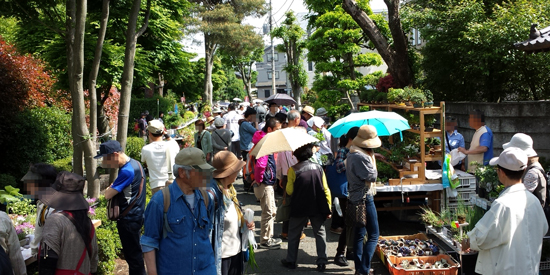 Bonsai matsuri in Omiya Japan