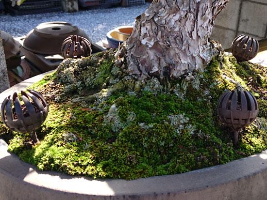 盆栽 肥料容器 プチドーム