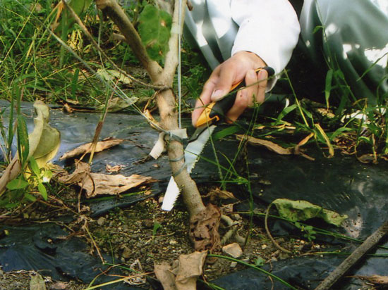 Bonsai saw ;  Gardening saw