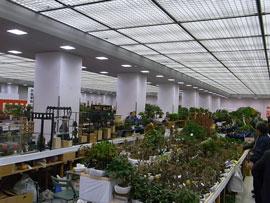 日本盆栽大観展
