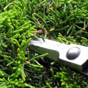 芽摘み切鋏