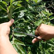 盆栽小枝切鋏